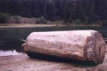 Salvaged Redwood from Big River