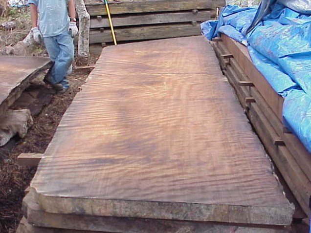 Redwood Curly Slab